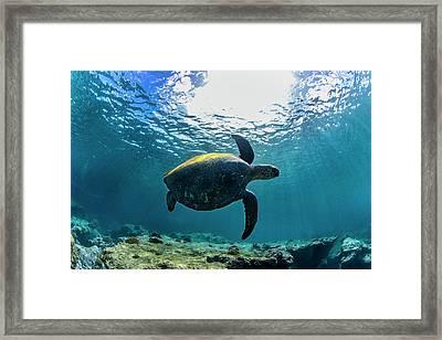 Stealth Turtle Framed Print by Sean Davey