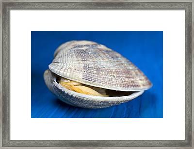 Steamed Clam Framed Print by Frank Tschakert