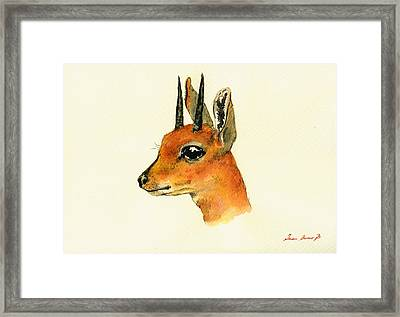 Steenbok Framed Print by Juan  Bosco