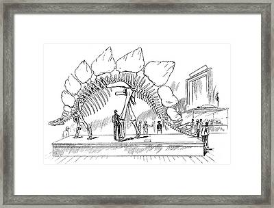 Stegosaurus Framed Print by Science Source
