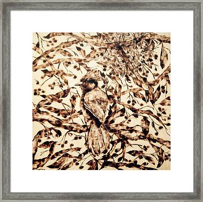 Stellar Jay Framed Print by Victoria General