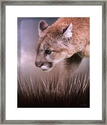 Step Forward - Cougar Art Framed Print by Jordan Blackstone
