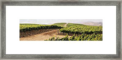 Step Into My Vineyard Framed Print by Marilyn Hunt