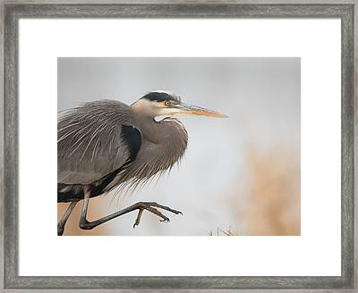 Stepping Out Framed Print by Angie Vogel
