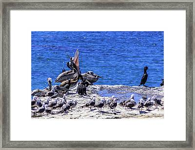 Sticking His Neck Out Framed Print by Randy Bayne