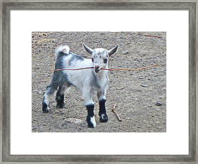 Sticky Business Framed Print by Gwyn Newcombe