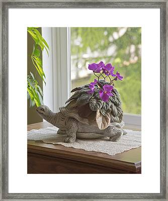 Still Life And Nature Near A Window. Framed Print by Gino Rigucci