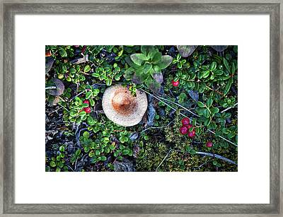Still Life By Mother Nature Framed Print by Cathy Mahnke