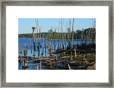 Still Wood - Manasquan Reservoir Framed Print by Angie Tirado