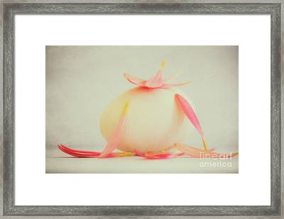 Stle Framed Print by SK Pfphotography