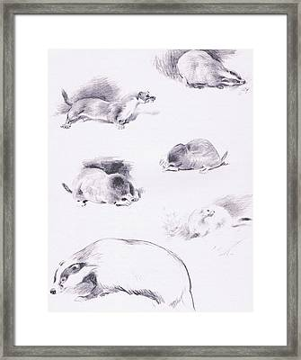 Stoat, Weasel, Badger And Mole Framed Print by Archibald Thorburn