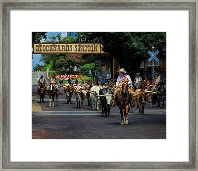 Stockyards Cattle Drive Framed Print by David and Carol Kelly
