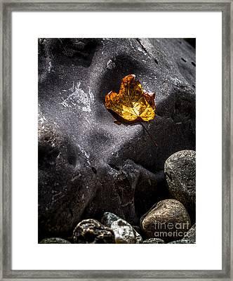 Stone And Orange Leaf Framed Print by James Aiken