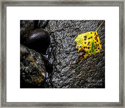 Stone And Yellow Leaf Framed Print by James Aiken