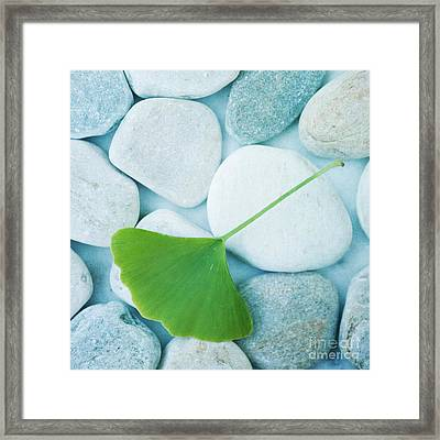Stones And A Gingko Leaf Framed Print by Priska Wettstein