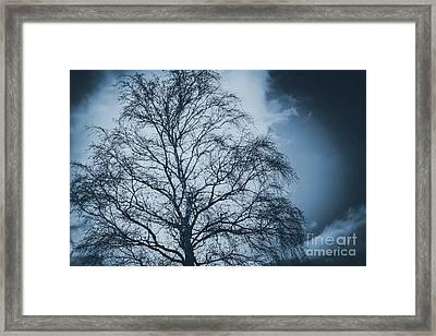 Storm Clouds And Eerie Spidery Tree Framed Print by Jorgo Photography - Wall Art Gallery