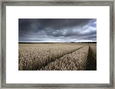Stormy Cornfields Framed Print by Ian Hufton