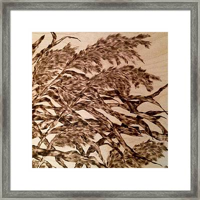 Straining In Wind Framed Print by Victoria General