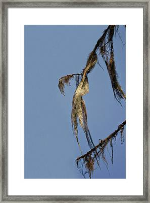 Strand Of Moss Swaying Gently With The Wind - Tiger Mountain Wa Framed Print by Christine Till