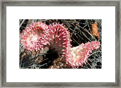 Strange Succulent Framed Print by Deborah  Crew-Johnson