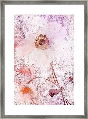 Strawberry Crush Framed Print by John Edwards