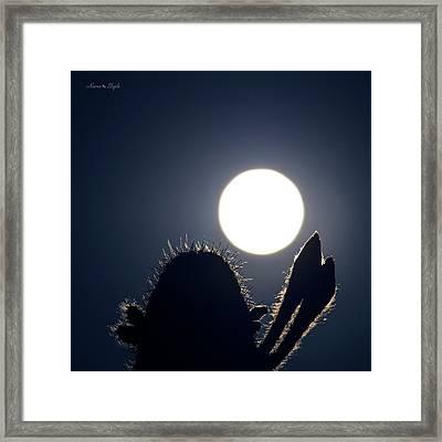 Strawberry Solstice Moon Framed Print by Karen Slagle