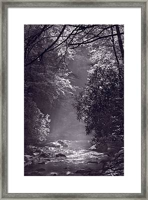 Stream Light B W Framed Print by Steve Gadomski