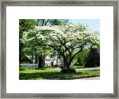 Street With Dogwood Framed Print by Susan Savad