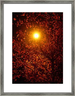 Streetlamp Through Tree Framed Print by Utopia Concepts