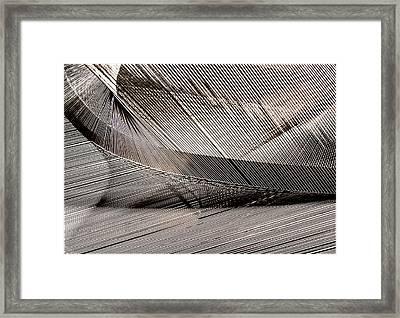 String Art #4 Framed Print by Aileen Mozug
