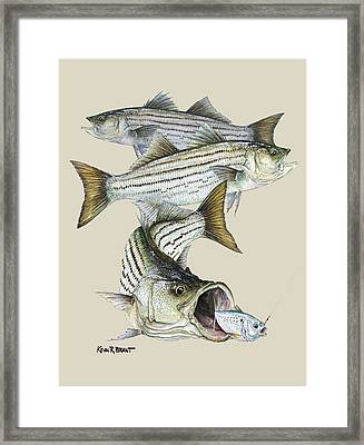 Striped Bass Framed Print by Kevin Brant