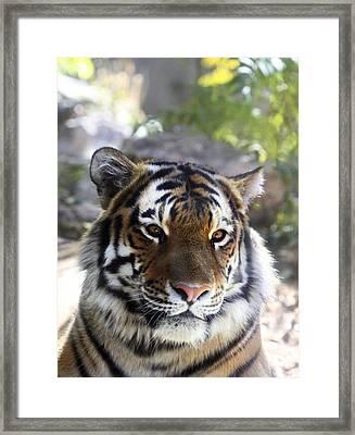 Striped Beauty Framed Print by Marilyn Hunt