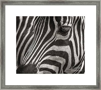 Striped Beauty Framed Print by Sherry Davis