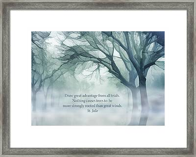 Strongly Rooted Framed Print by Terry Davis