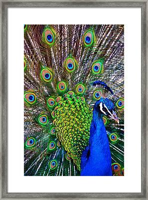 Strut Framed Print by Angelina Vick
