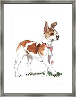 Strutting Chihuahua Framed Print by Debra Jones