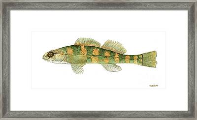 Study Of A Green Sided Darter Framed Print by Thom Glace