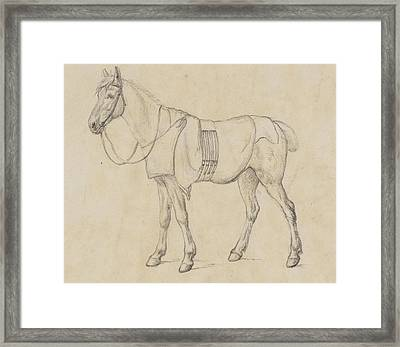 Study Of A Horse Framed Print by Robert Hills