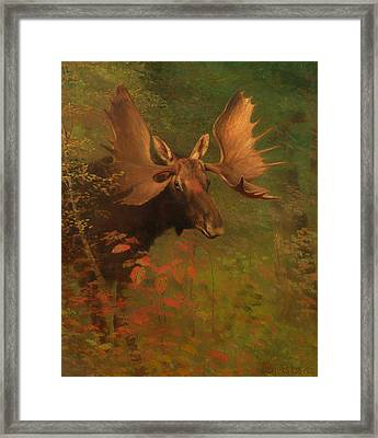 Study Of A Moose Framed Print by Mountain Dreams