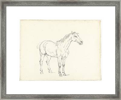 Study Of A Standing Horse Framed Print by MotionAge Designs