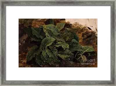 Study Of Leaves Framed Print by John Middleton