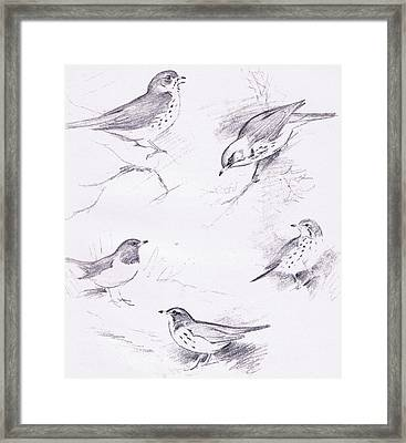Study Of Thrushes Framed Print by Archibald Thorburn