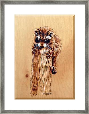 Stumped Framed Print by Ron Haist