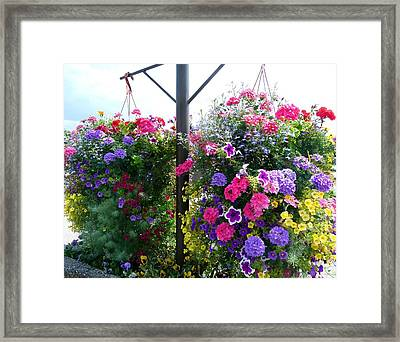 Stunning Floral Baskets Framed Print by Will Borden