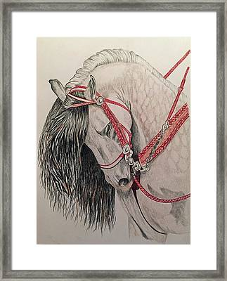 Stunning Spanish Horse Framed Print by Brenda Brown
