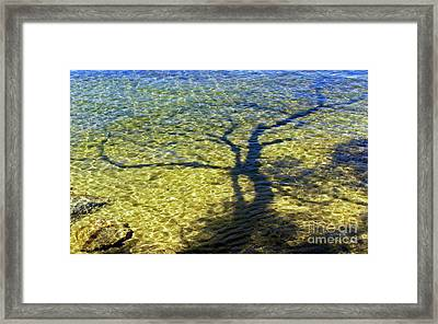 Submerged Abstraction  Framed Print by Skip Willits