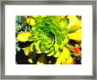 Succulent Close Up Framed Print by Barbara Snyder