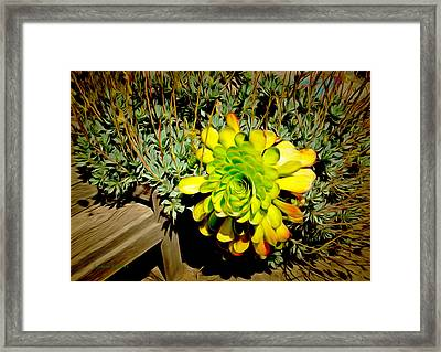 Succulent Study Framed Print by Barbara Snyder