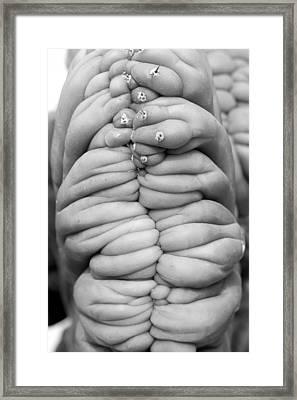 Succulent Three Framed Print by Jim Occi