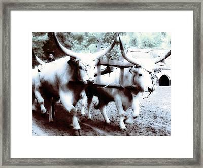 suerke marha from Hungary Framed Print by ELA-EquusArt